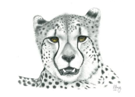 A.CheetaD