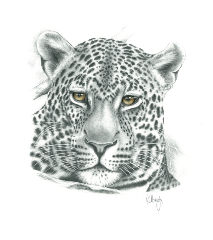 A.LeopardD