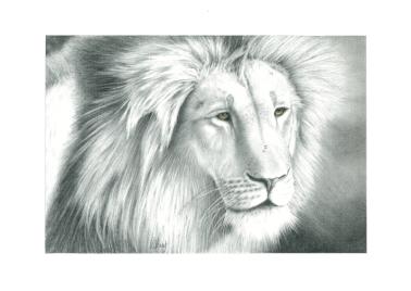 A.LionD