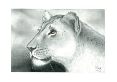 A.LionessD