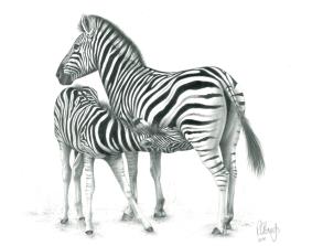 A.Zebra Mum & BabeD