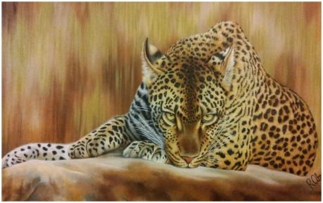 Kaye's Leopard