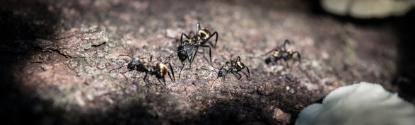 Little Ant Family