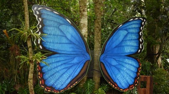 Morpho Wings