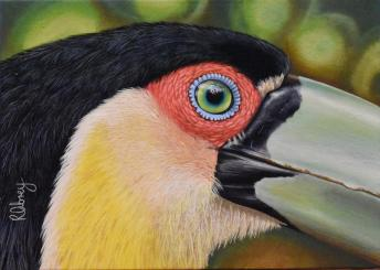 Green-Billed Toucan