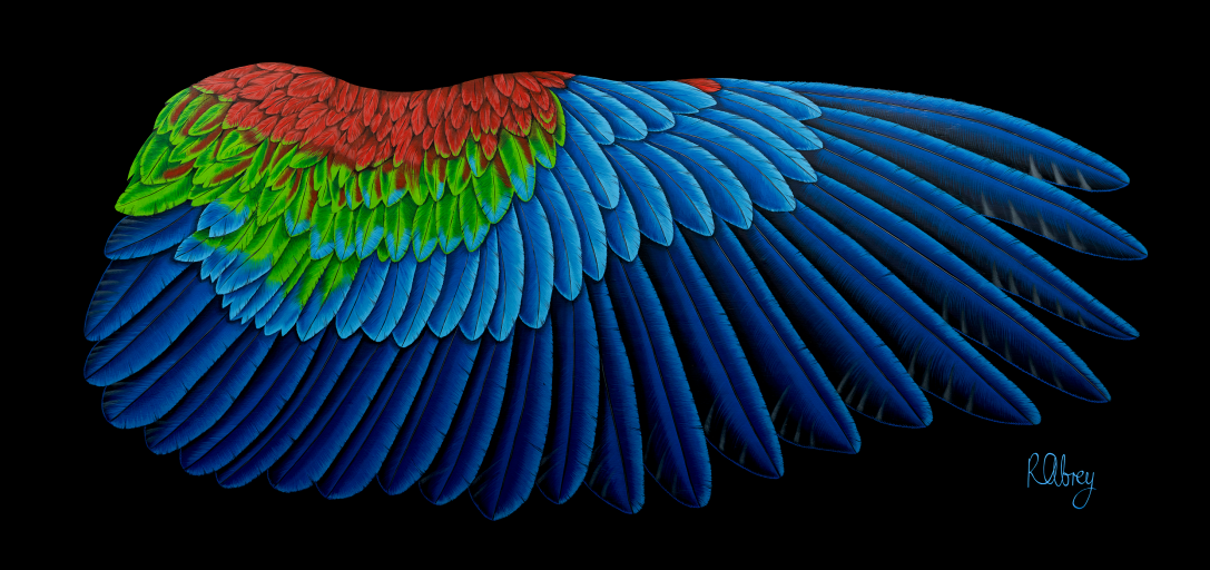 MacawWingCanvas